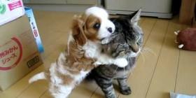 Gato paciente con cachorro de perro