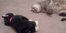 Conversación entre gatos