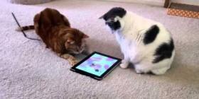 Gatos cazando ratones en el iPad