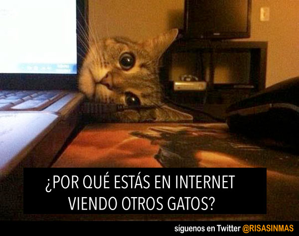Gatos en Internet