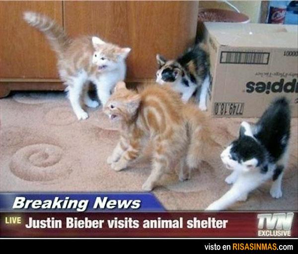Justin Bieber visita un centro de animales