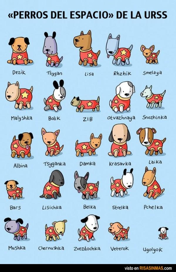 Perros del espacio de la URSS