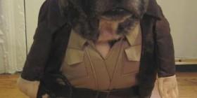 Disfraces perrunos: Indiana Jones