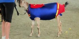 Disfraz de Super cabra