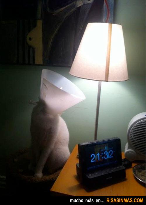 El gato y lámpara