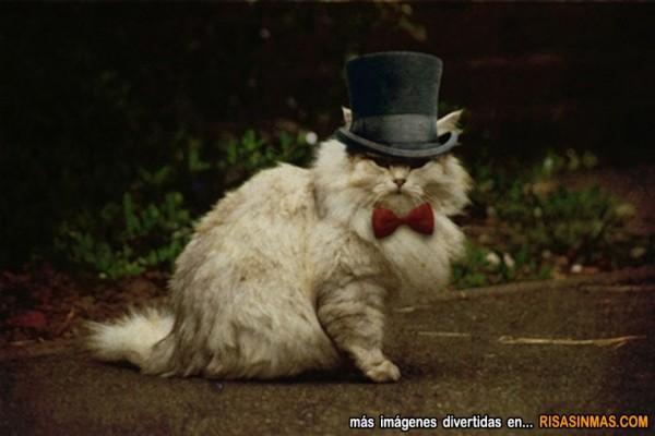 El señor Don gato