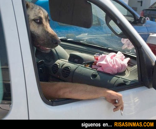 Perro fumando