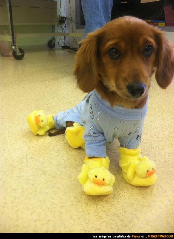 Perro en pijama