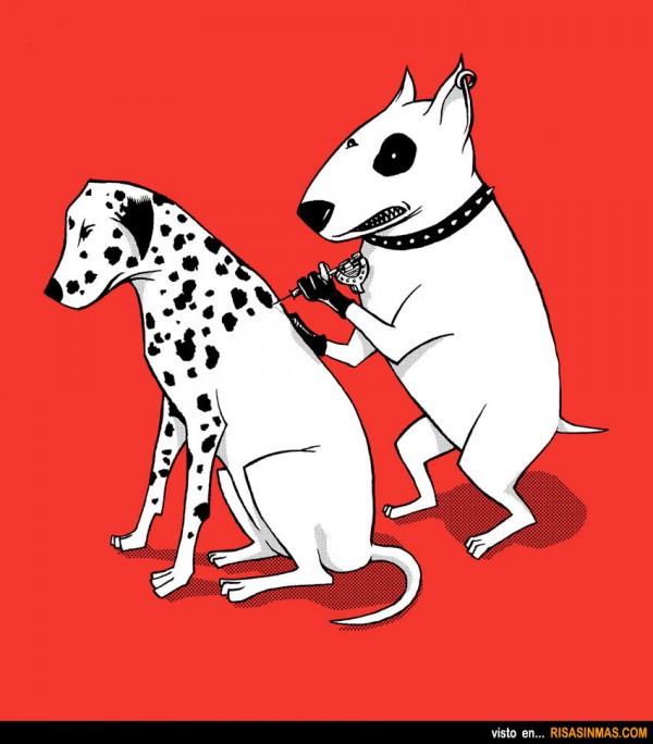 Tatuando a un perro