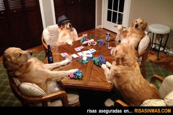 Una partida de perros
