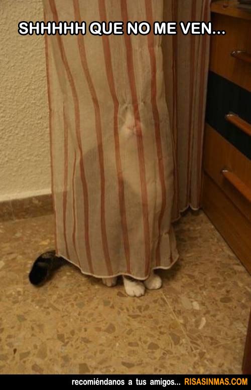 Aquí hay gato escondido