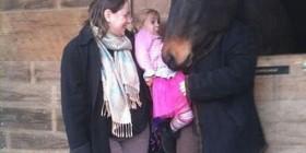 Cara de caballo