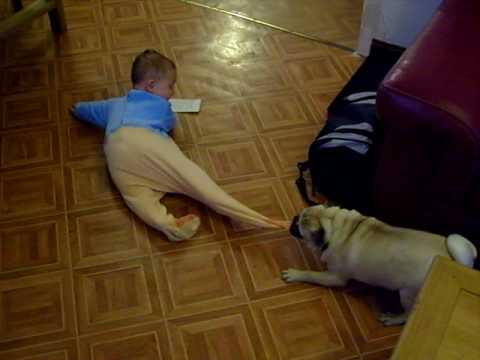 Carlino jugando con un bebé