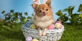 Disfraces perrunos: Conejo de Pascua