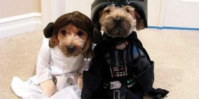 Disfraces perrunos: Star Wars