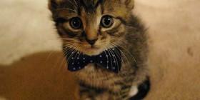 Gatito con pajarita