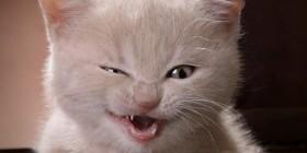 Gatito quejandose de la comida