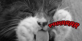 Gato burlándose