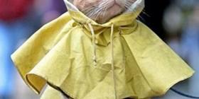 Gato con chubasquero