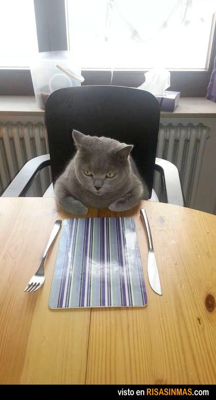 ¿Qué, aquí cuándo se come?