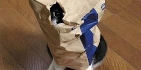 Gato preparado para atacar