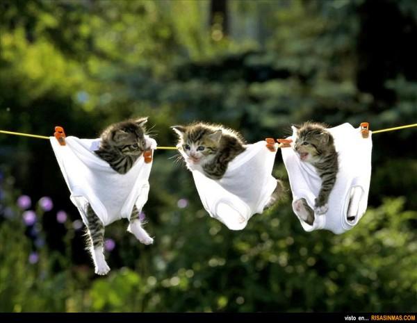Gatitos colgados