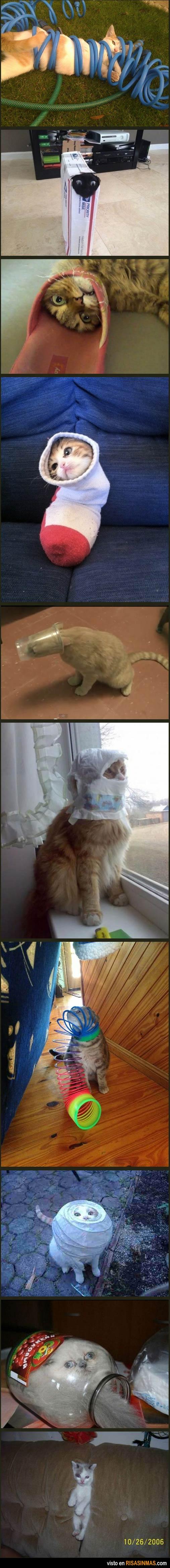 Gatos y su extraña afición