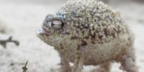 La rana patito de goma