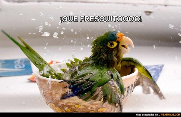 Loro bañandose