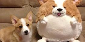 Parecidos NO razonables: perretes