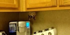 Encuentra al gato