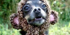 Perro con gorro de lana