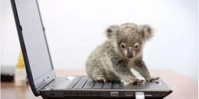 Primera lección de informática de un koala