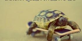 Tortuga en monopatín