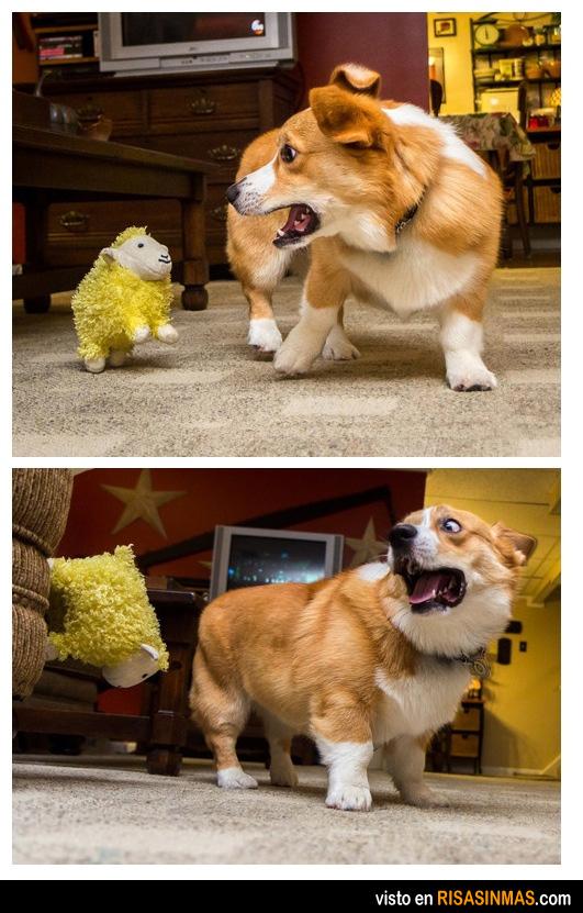 ¡Dios mío, una oveja de peluche amarilla!