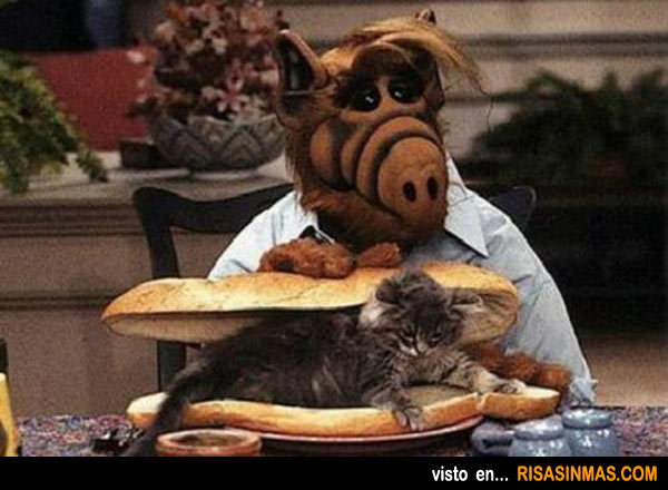 Alf preparándose la merienda