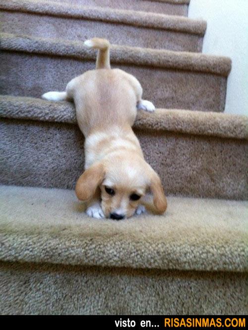 Aprendiendo a bajar las escaleras