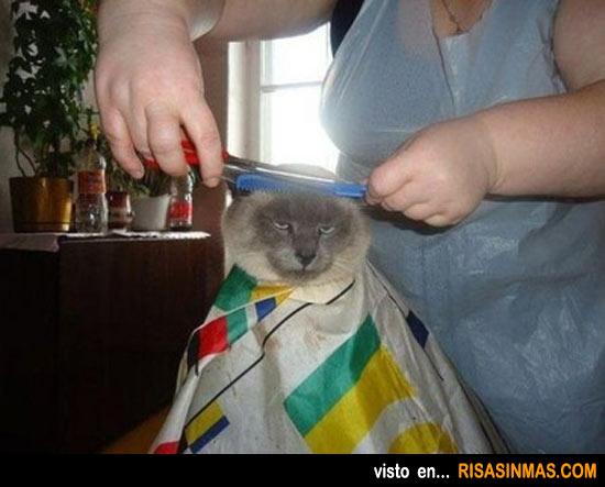 Gato en la peluquería