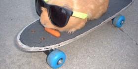 Cobaya skater