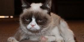 El gato cabreado también odia los lunes