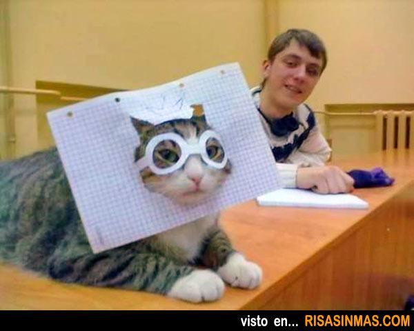 El gato con gafas