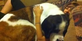 Falta sofá o sobra perro