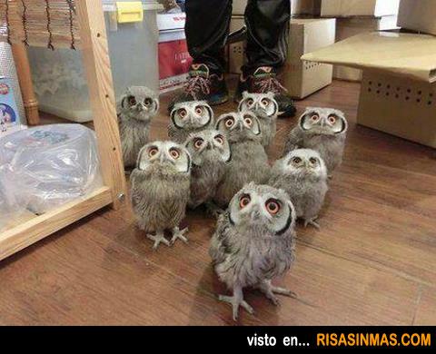 Familia curiosa