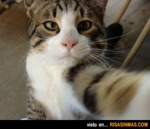 Fotos para el Facebook de gatos
