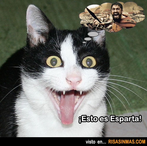 Gato espartano