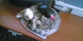 Gato y ratón también pueden ser amigos