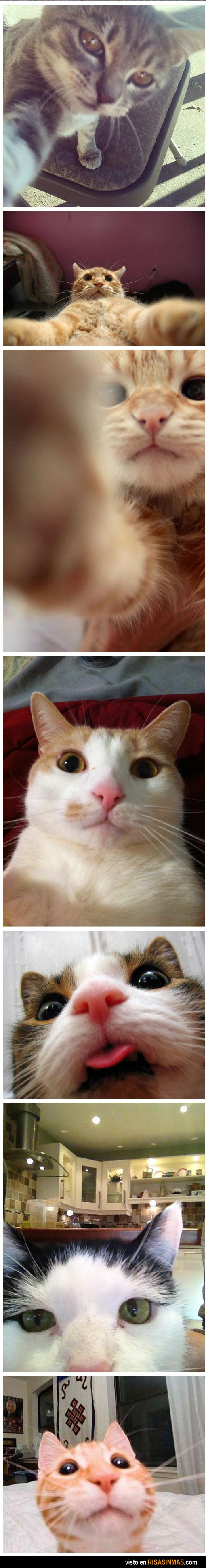 Gatos en Facebook