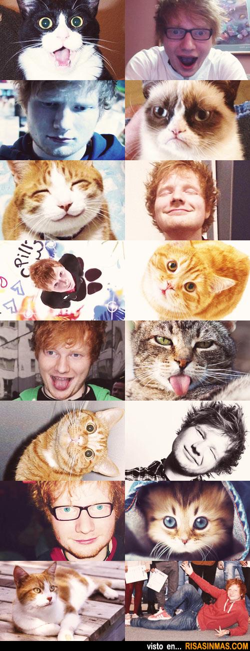 Imitando caras de gatos