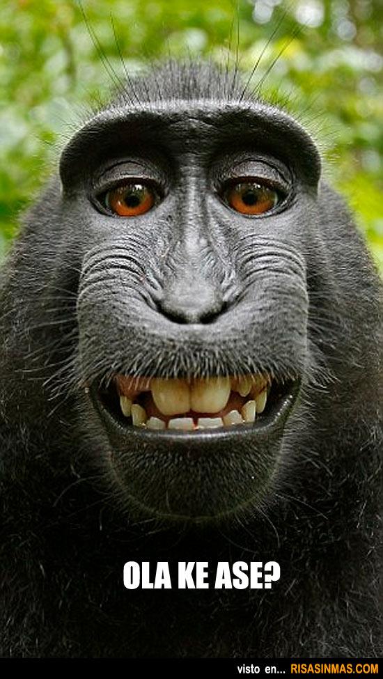 Mono posando divertido
