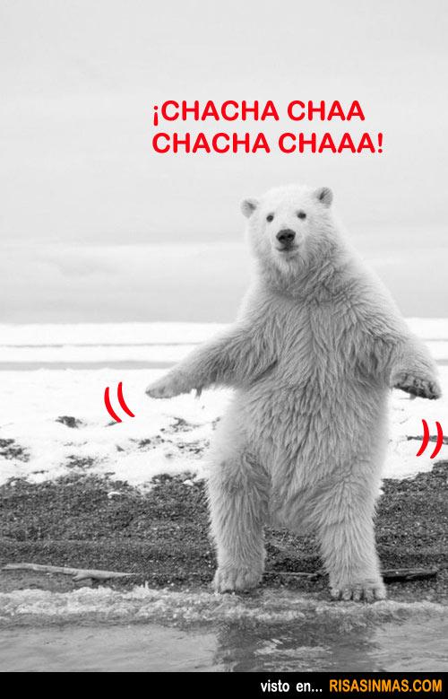 Oso blanco bailando Chachachá